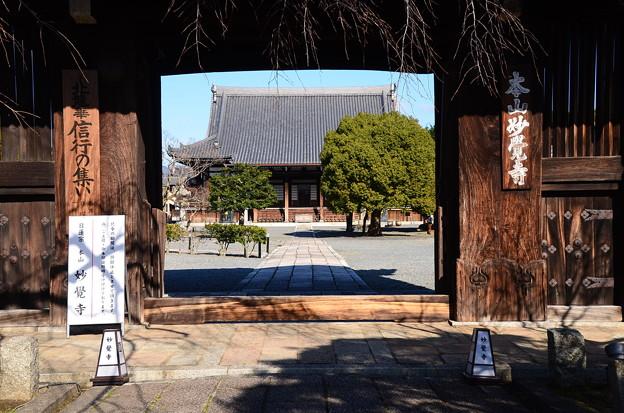 新春の妙覚寺