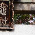 Photos: 竈社の紅梅