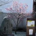 Photos: 応仁の乱の石碑と