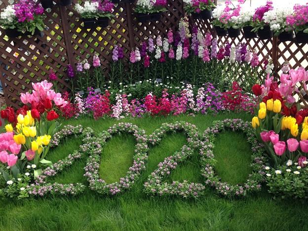 早春の草花展 2020