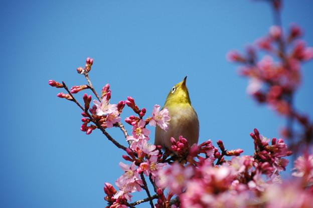 もう春かな~