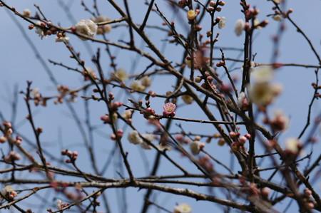 春日野(カスガノ)