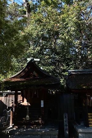 宗像神社の藪椿