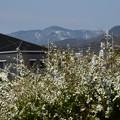 Photos: 雪の愛宕山