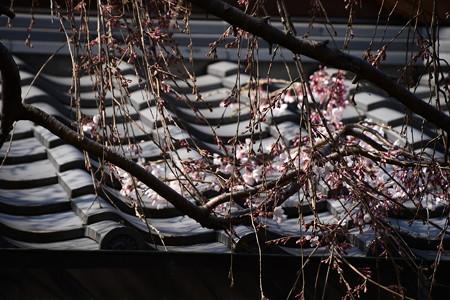 屋根の上に咲く
