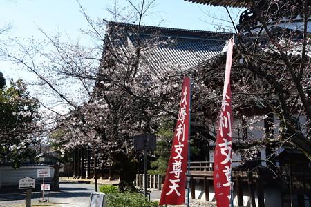 染井吉野の咲き始めた本法寺