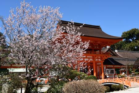 楼門脇の桜