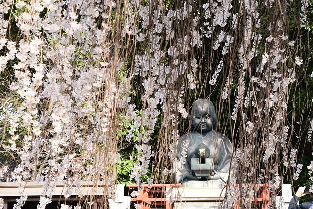 阿亀桜の中の阿亀さん