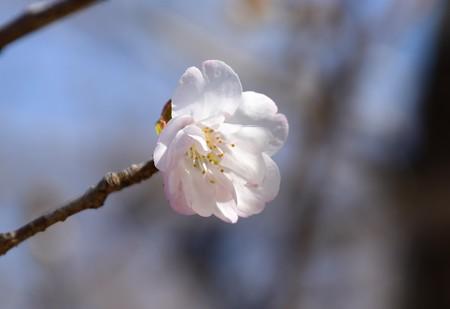 八重山古志(ヤエヤマコシ)