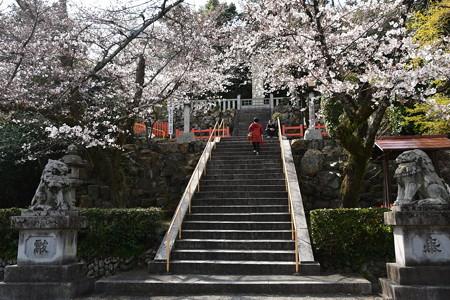 建勲神社の染井吉野