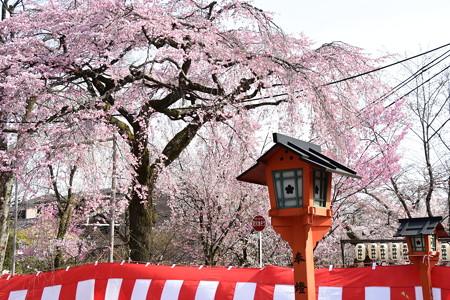 桜の宮の賑わい