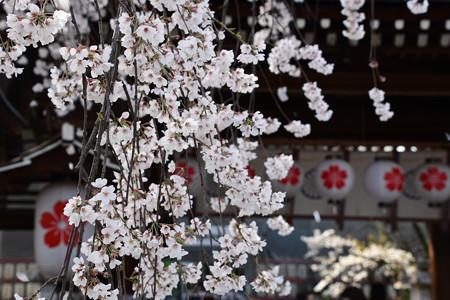 賑わい始めた桜の宮