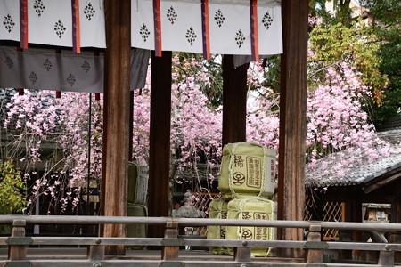 八重紅枝垂れ咲く上御霊神社