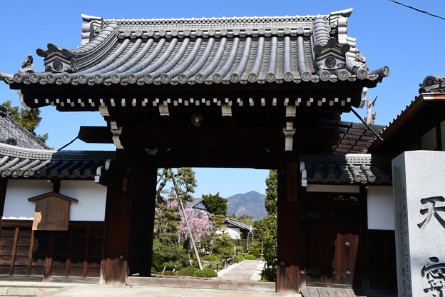 額縁門の中の八重紅枝垂れと比叡山