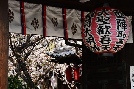 桜の雨宝院