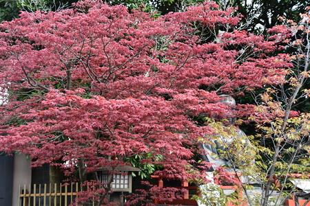 春もみじの奥の阿亀像