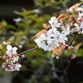 Photos: 嵐山(アラシヤマ)
