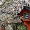 Photos: 松月(左)と嵐山(右)