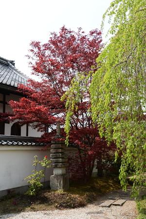 春もみじと葉桜