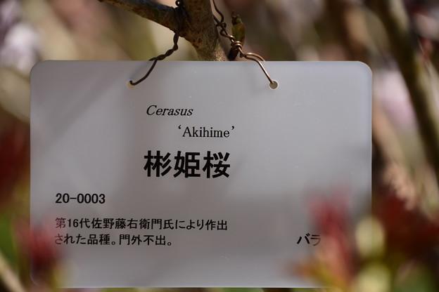 アキヒメザクラ(彬姫桜)