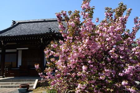 本堂前の関山