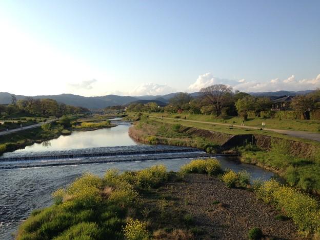 新緑の賀茂川