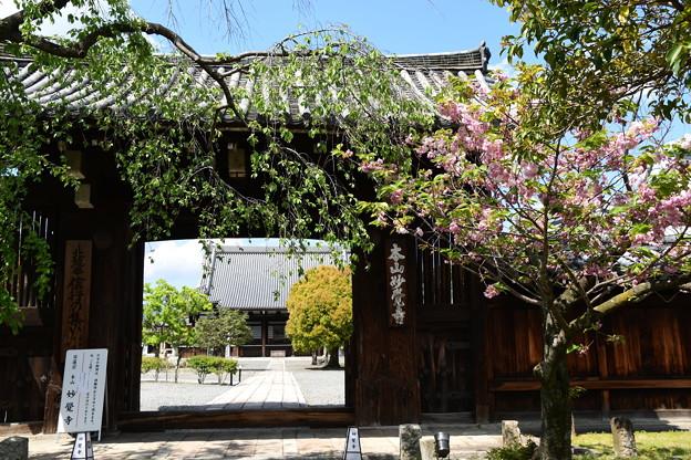 4月終わりの妙覚寺