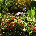 平野神社の初夏の花々