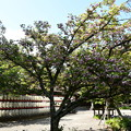 突羽根咲く平野神社