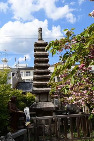 紫式部供養塔前の普賢象