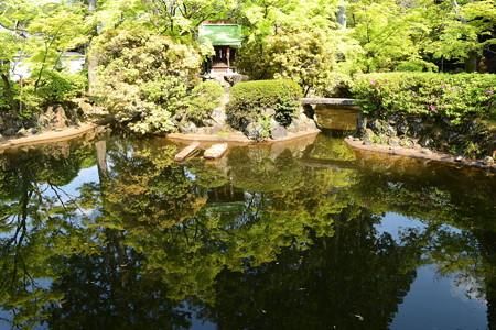池に映る新緑
