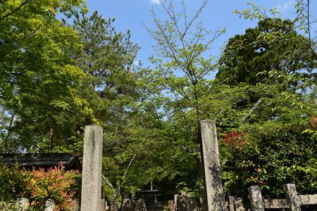 緑の会津藩墓地