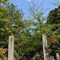 Photos: 緑の会津藩墓地