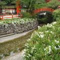Photos: 空木咲く下鴨神社