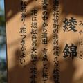 Photos: アヤニシキ(綾錦)