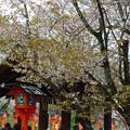 Photos: アラシヤマ6(嵐山)