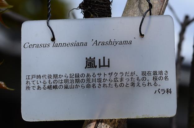 アラシヤマ(嵐山)