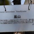 Photos: アラシヤマ(嵐山)