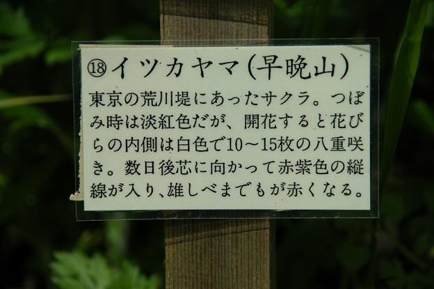 イツカヤマ(早晩山)