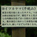 Photos: イツカヤマ(早晩山)