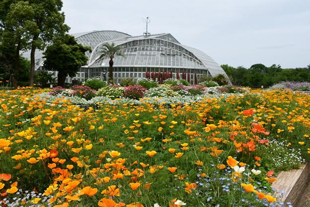 再開された府立植物園