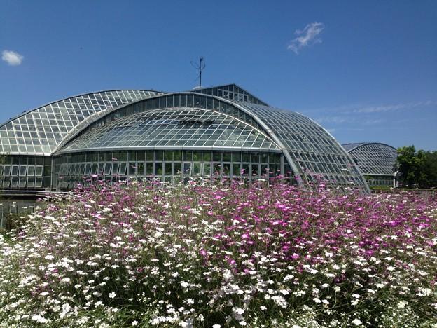 5月下旬の府立植物園