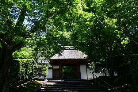 緑の中の安楽寺