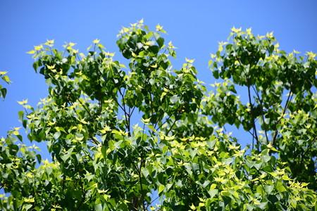 新緑の濃淡
