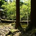 Photos: 倒木の池