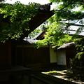 Photos: 法然院の青もみじ