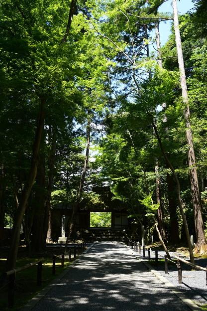 緑の中の法然院