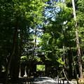Photos: 緑の中の法然院