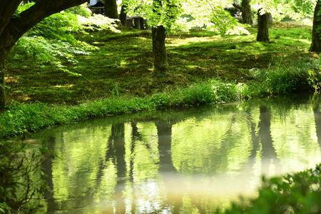 新緑に染まる池面