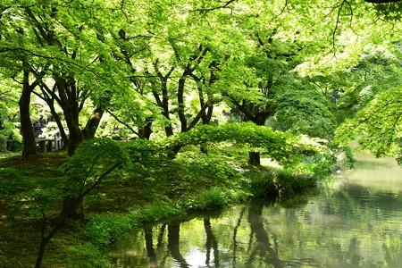 緑の植物園